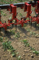 Mechanical weed control with torsion weeders in sugarbeets
