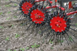 Rotary harrow in sugerbeet