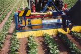 mechanical weed control horizontal brush