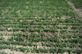 Optimalisation use of herbicides