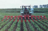 ridger chicory mechanical weed-control