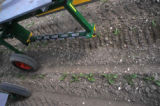 Driven harrow in sugarbeet