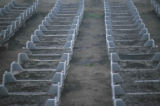 growing_weeds_in_trays