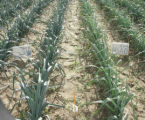 N-efficiency depends on soil quality characteristics