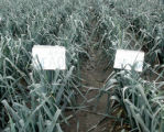 N-efficiency determined by soil quality characteristics