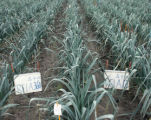 N-efficiency determined by soil-quality characteristics