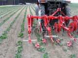 mechanical weed control finger weeders hoes implement