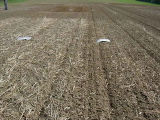 slugs trial cover green manure crops