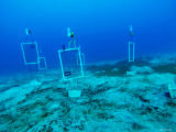 Testing biodegradable panels for fish traps at Statia